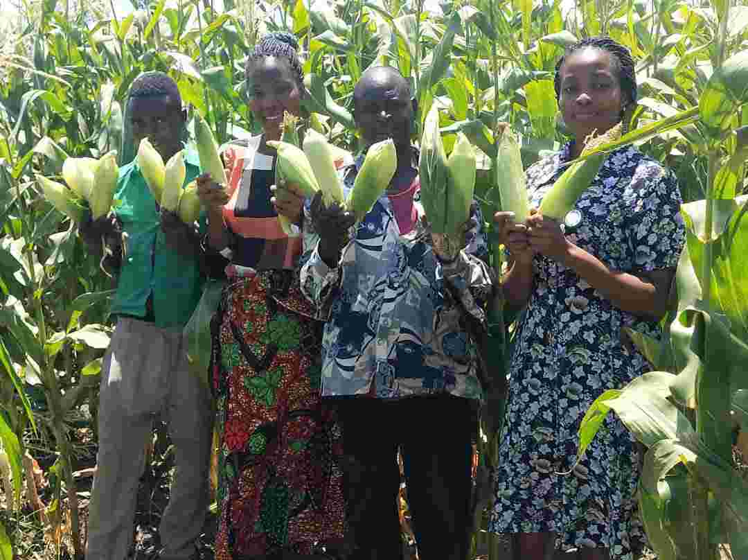 RHEMA irrigation projects in Malembo starts bearing fruits