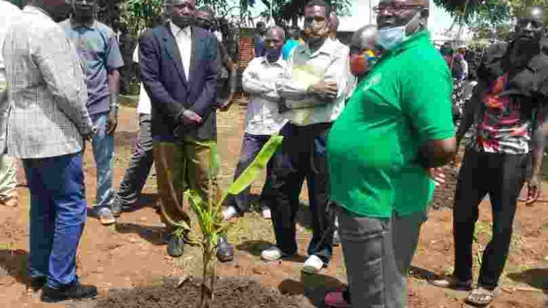 Rhema turns Khongoni into Thyolo promotes banana farming